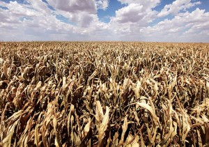 uMfolozi sugar cane farmers are taking a hit from the worst drought in KwaZulu-Natal in more than twenty years.